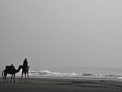 Camel Taxi